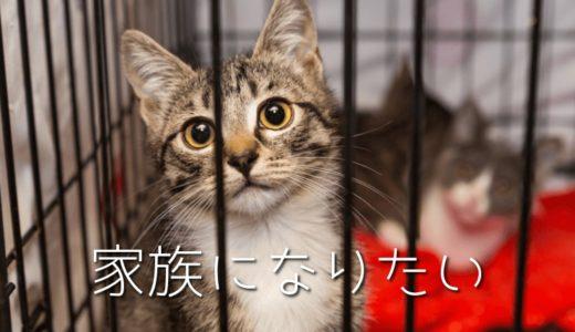 保護猫の譲渡(引き取り)の条件や費用を徹底解説!一人暮らしは厳しいの?