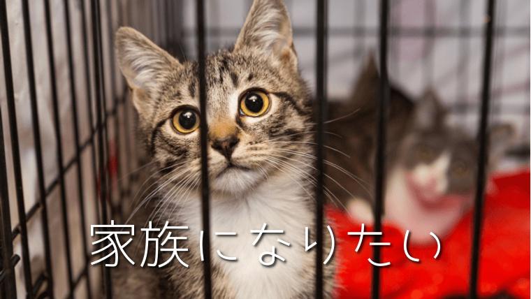 保護猫の譲渡・引き取りの条件や費用