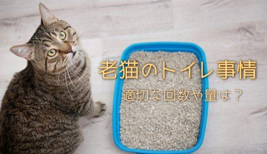 老猫のトイレの適切な回数や量は?はみ出す失敗の原因と対策法を解説
