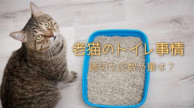 老猫のトイレ事情