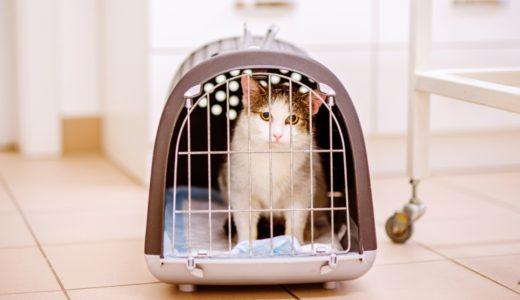 保健所の猫の引き取り条件や引き取り方|譲渡の際にお金はかかる?