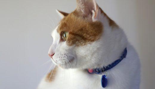 猫用首輪Catlog(キャトログ)の購入方法や価格・値段は?使い方も解説!