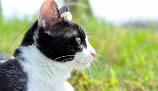 旅猫リポート(映画)の動画フルを無料視聴する方法は?配信はいつ?