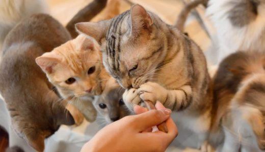 猫カフェ初心者の楽しみ方まとめ|料金・服装・マナーや注意点・おすすめ時間帯も解説!