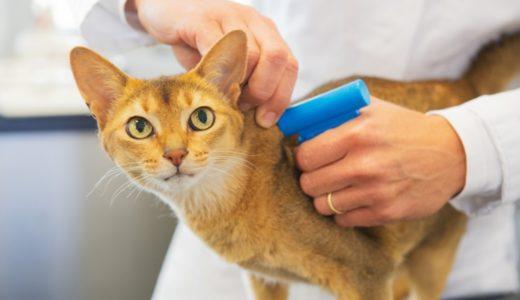 猫のマイクロチップの必要性とは?メリットとデメリット、副作用についても