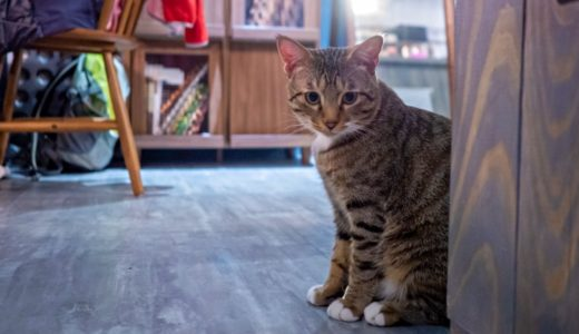 下北沢の猫カフェおすすめまとめ!抱っこや子供可はある?
