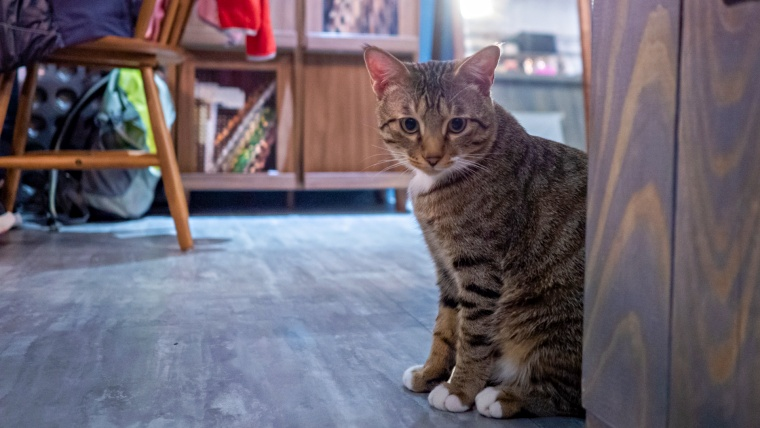 下北沢の猫カフェおすすめ一覧