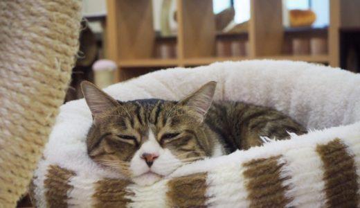 【2019年最新】富山県のおすすめ猫カフェ5選!
