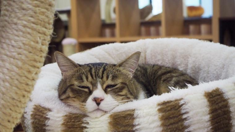 富山の猫カフェまとめ