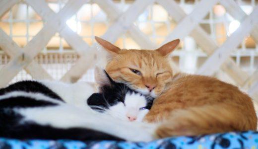 新宿の猫カフェおすすめ5選!安い・抱っこ&触れるOKのお店も紹介