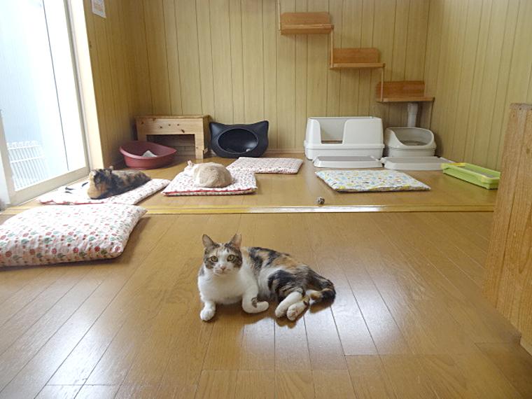 徳島猫カフェマイケル