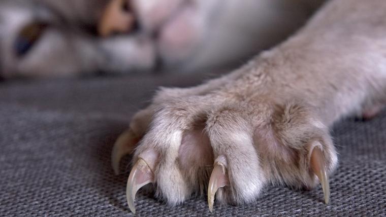 猫の爪切りの方法