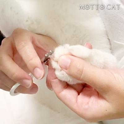 猫の爪切り(前足)