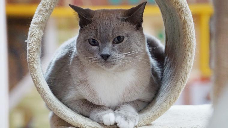 池袋の猫カフェまとめ