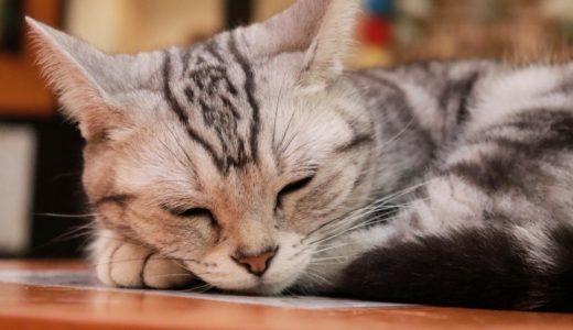 【2020年最新】熊本県のおすすめ猫カフェ5選!
