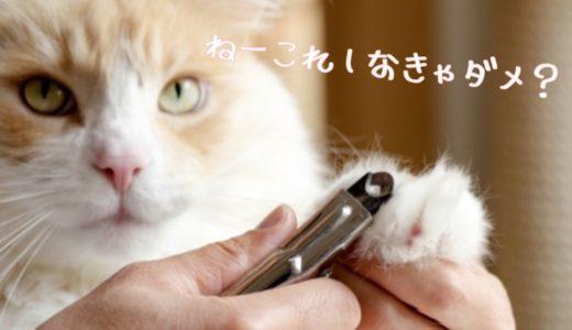 猫の爪切りの適切な頻度と必要性|後ろ足や爪とぎする場合は不要?