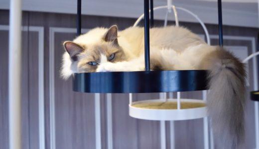町田の猫カフェおすすめ5選!安い&抱っこできる&子供OKのお店はある?