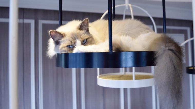 町田の猫カフェおすすめ一覧