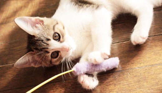 猫との遊び方のコツ8選|猫がストレス解消できる上手なじゃらし方を解説!