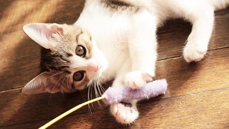 猫の遊び方のコツ