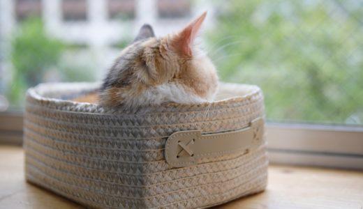 猫を旅行で留守番させるのは何日までOK?2泊3日以上の場合はどうするべきか