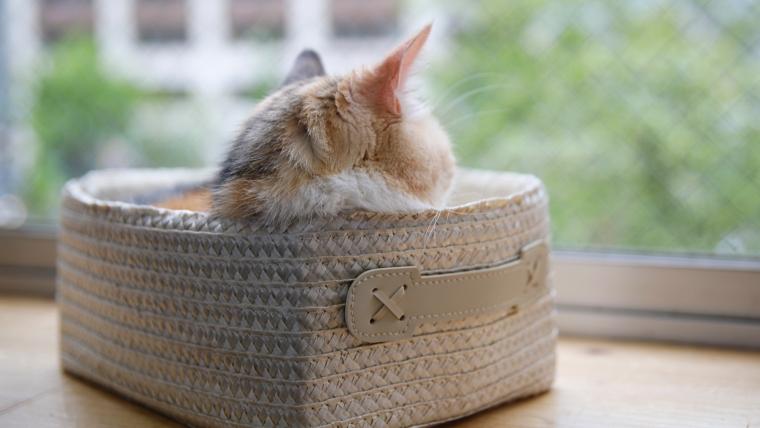 猫の留守番