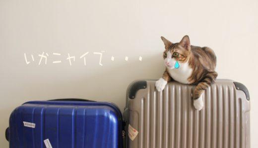 猫に1週間旅行中留守番をさせても大丈夫?長期旅行する時の対策方法