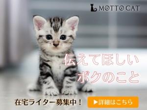 猫ライター募集